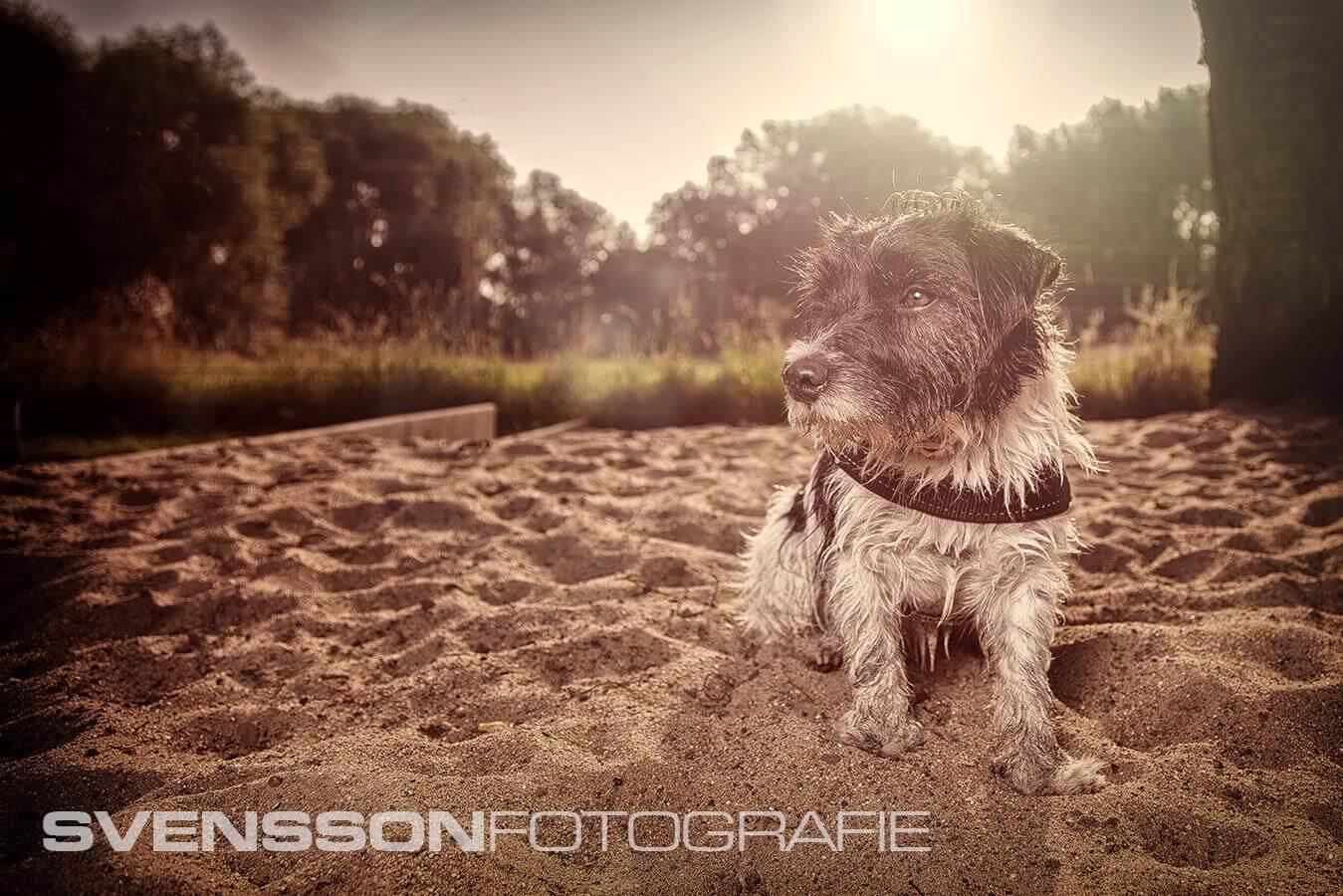 Jack im Sandkasten