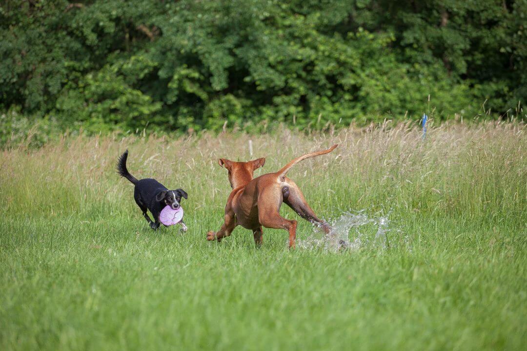 Huta in Dinslaken - Spass für Hunde