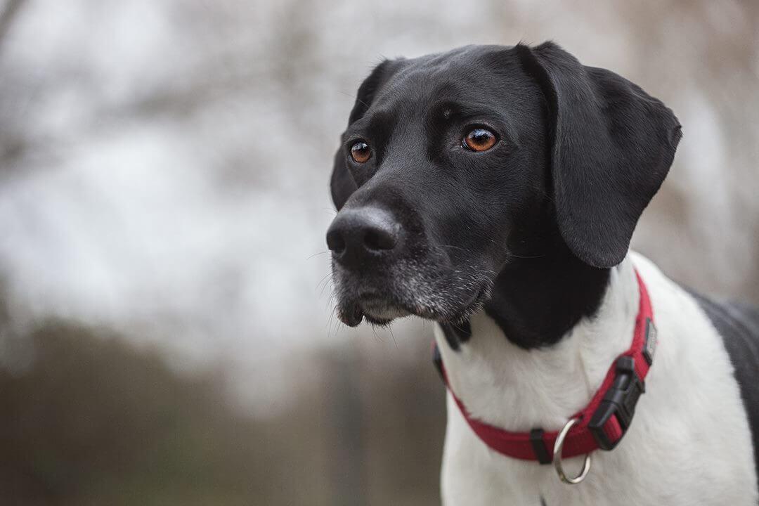Hund auf Aussichtsplattform