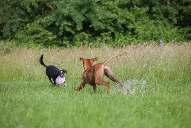 Probestunden Hundepension