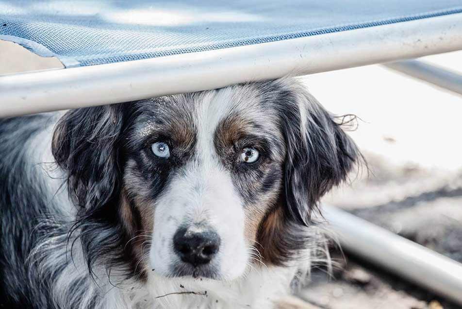 Probestunden für Hunde in Huta