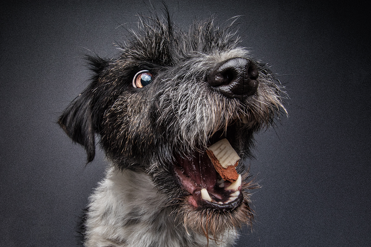 Terrier Mix Jack