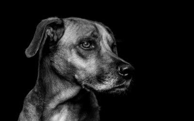 Hunde in Black&White